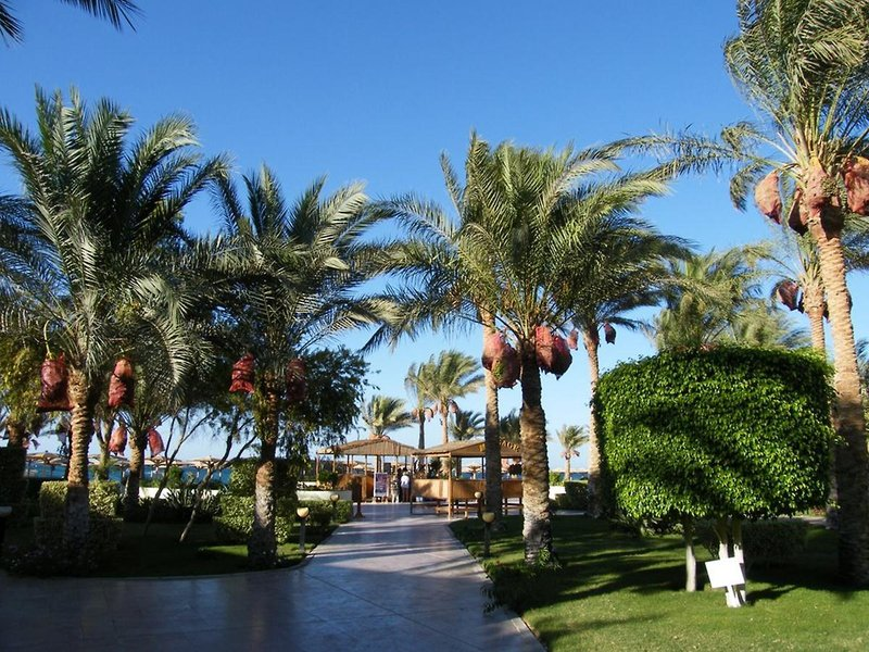 All Inclusive Hurghada Urlaub im Palm Beach Resort