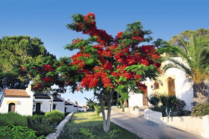 Acapulco Beach Club & ResortGarten