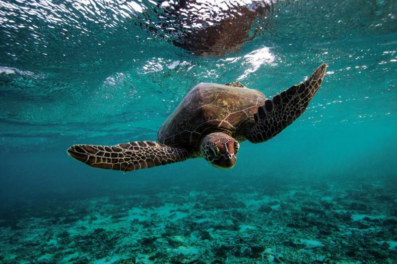 Lady Elliot Island Eco Resort Tiere